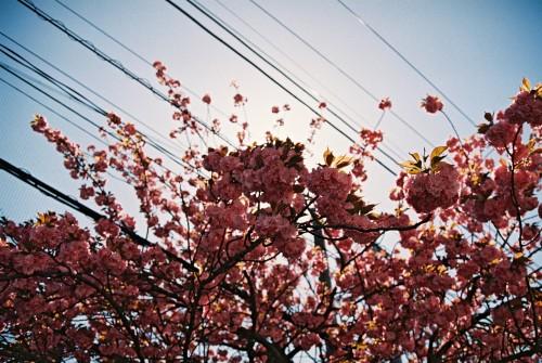 blossom by Andreas Pasvantis