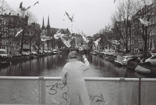 pigeons by Andreas Pasvantis